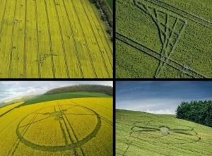 crop_circles_UK_Italy_2014