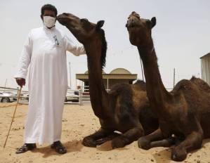v2-camels-saudi-arabia-mers